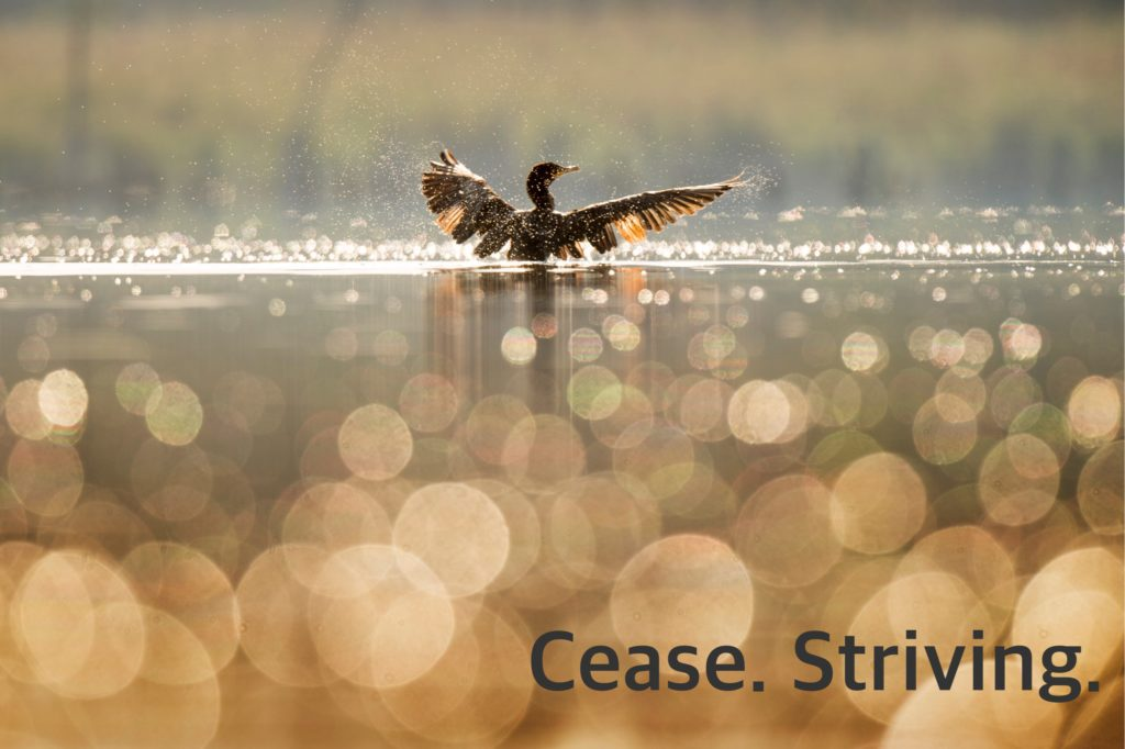 The Joy Experiment: Cease. Striving.
